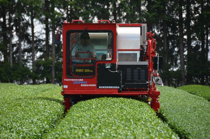 Ishikawa Tea farm